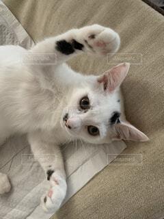 両手広げた猫の写真・画像素材[4786619]