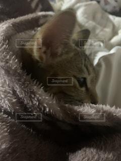 寂しそうな顔をする猫の写真・画像素材[4802941]