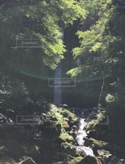 滝の写真・画像素材[4769469]