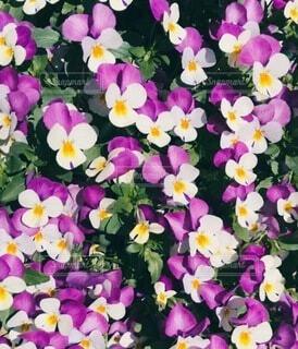 お庭の花の写真・画像素材[4770349]