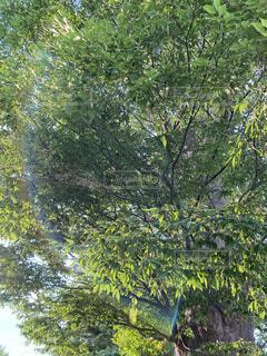 木のクローズアップの写真・画像素材[4769583]