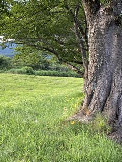 草原の木の写真・画像素材[4769584]