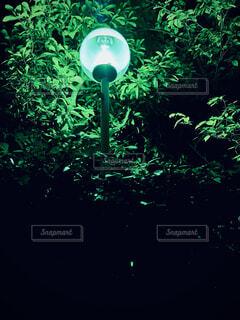 自然を照らす光の写真・画像素材[4769553]