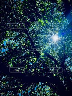 森の中の木の写真・画像素材[4769557]