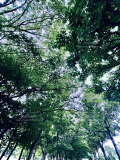 公園の緑道の写真・画像素材[4769559]