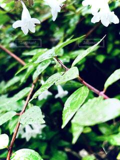 花のクローズアップの写真・画像素材[4769622]