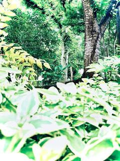 森の中の大きな緑の木の写真・画像素材[4769624]