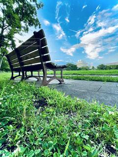 草の中に座っている木造の公園のベンチの写真・画像素材[4772325]
