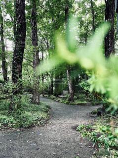 森の真ん中にある木の写真・画像素材[4772329]