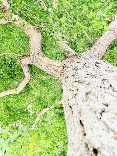 木のクローズアップの写真・画像素材[4772331]