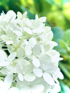 花のクローズアップの写真・画像素材[4772333]