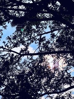 木の上に座っている鳥の群れの写真・画像素材[4772339]