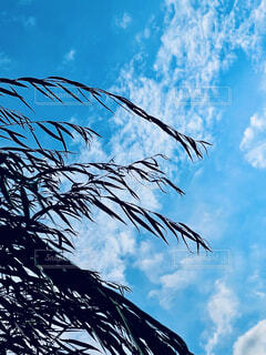 青い空に対するヤシの木の写真・画像素材[4772340]