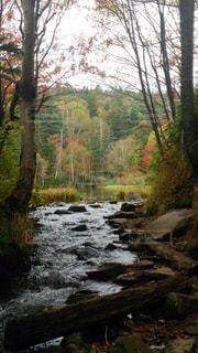 自然の写真・画像素材[213907]