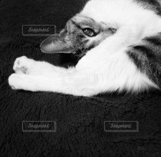 寝転んでる猫の写真・画像素材[4771225]