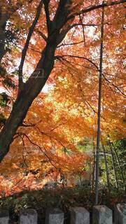 秋だ〜紅葉だ〜の写真・画像素材[4775865]