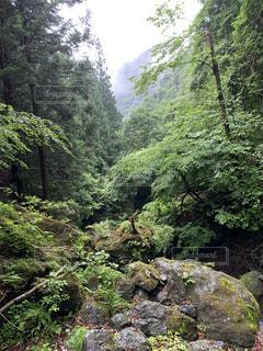 森の中、、ここはドコ?の写真・画像素材[4770038]