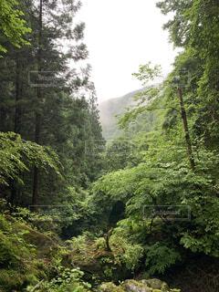 森林の木々に抱かれての写真・画像素材[4770035]