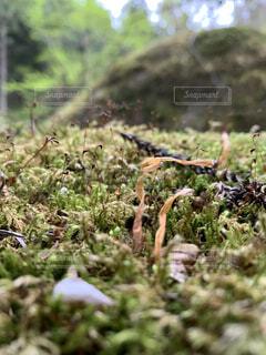 森林の中の小さな命の写真・画像素材[4770039]