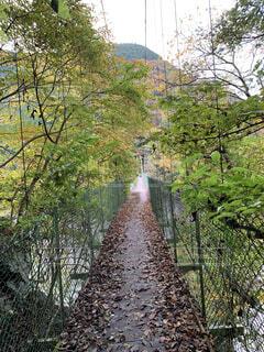 森の中 吊り橋の先での写真・画像素材[4770058]