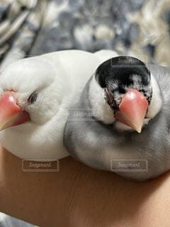 テーブルの上に座っている鳥の写真・画像素材[4770011]