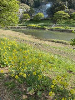 青野川の写真・画像素材[4770183]