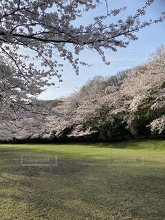 稲取クロスカントリーの写真・画像素材[4770199]