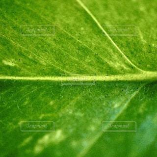葉脈の写真・画像素材[4773164]