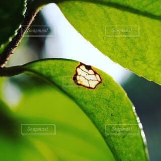 緑の葉のクローズアップの写真・画像素材[4773163]
