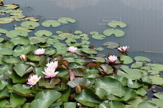 池のクローズアップの写真・画像素材[4778761]