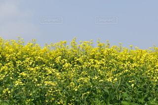花のクローズアップの写真・画像素材[4778767]