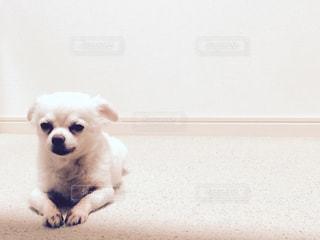犬の写真・画像素材[213978]