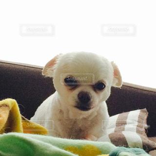 犬の写真・画像素材[214777]