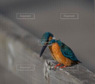 枝に止まっているカラフルな鳥の写真・画像素材[4779848]