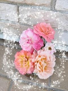 薔薇の小瓶の写真・画像素材[4771430]