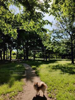 愛犬のお散歩の写真・画像素材[4771441]