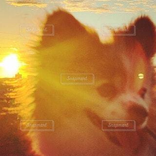 朝陽を浴びる小犬の写真・画像素材[4771466]