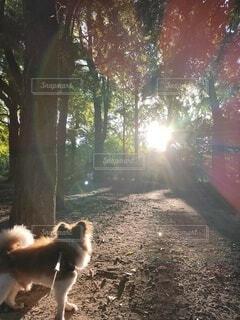森林を歩く小犬の写真・画像素材[4771480]