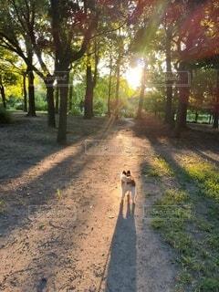 森林の小道を行く小犬の写真・画像素材[4771481]