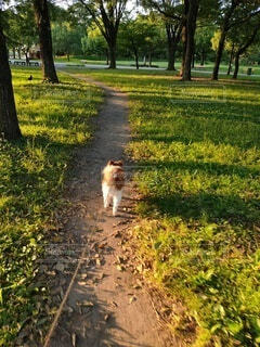公園の小道を歩く小犬の写真・画像素材[4771484]