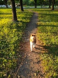 愛犬のお散歩の写真・画像素材[4771492]