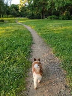 草原の小道を行く小犬の写真・画像素材[4771485]