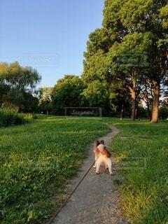 草原の小道に立つ小犬の写真・画像素材[4771483]
