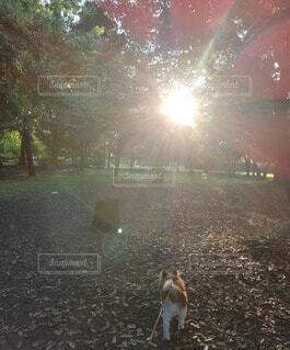 朝陽を浴びる小犬の写真・画像素材[4771486]
