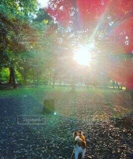 朝陽を見る犬の写真・画像素材[4771489]