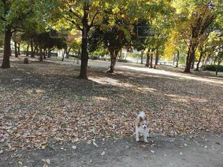 犬のお散歩 森林浴の写真・画像素材[4773392]