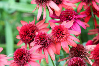 花ですの写真・画像素材[4771423]