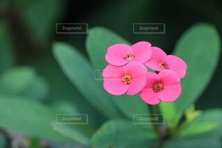 花ですの写真・画像素材[4773766]