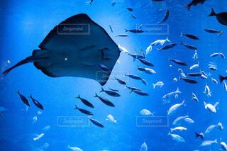 水族館ですの写真・画像素材[4777039]