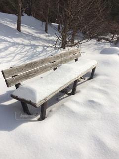 冬のベンチの写真・画像素材[981762]